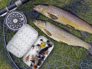 Two Fine Brown Trout Caught with Dapping Fly and Rod from a Boat on Loch Ba by John Warburton-lee