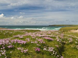 Wild Flowers and Coastline, Isle of Lewis, Outer Hebrides, Sotland, United Kingdom, Europe by John Woodworth