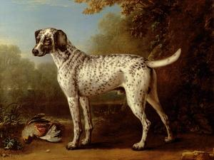 Grey Spotted Hound, 1738 by John Wootton