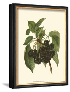 Black Cherries by John Wright