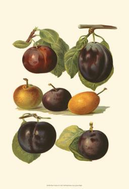 Plum Varieties II by John Wright