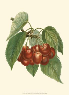 Red Cherries by John Wright