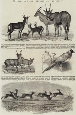 The Earl of Derby's Menagerie, at Knowsley by John Wykeham Archer