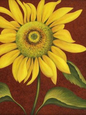 Sunflower by John Zaccheo