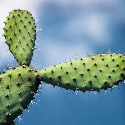 Cactus against Sky, Low Angle View by Johner Images