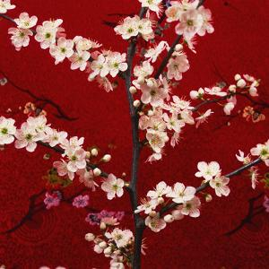 Prunus, Cherry Tree by Johnny Greig