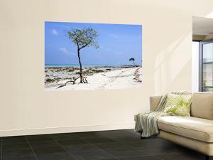 Beach on East Side of Havelock Island, Near Barefoot Scuba by Johnny Haglund