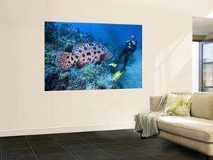 Fish on Reef by Johnny Haglund