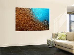 School of Glasfish by Johnny Haglund