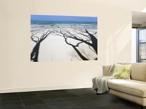 Shadow of Trees on Deserted Beach by Johnny Haglund