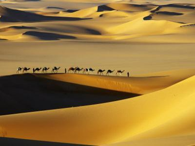 Tuareg Nomads with Camels in Sand Dunes of Sahara Desert, Arakou by Johnny Haglund
