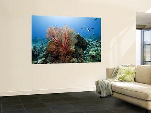 Underwater Reef by Johnny Haglund