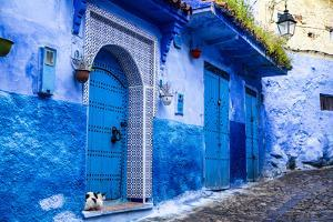 Chefchaouen, Morocco. Cat and blue door and buildings by Jolly Sienda