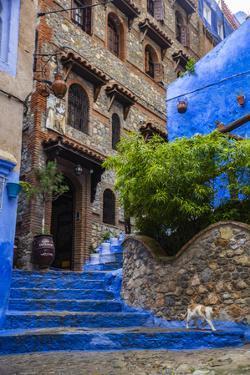 Chefchaouen, Morocco. Cat walking down steps. by Jolly Sienda