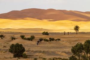Erg Chebbi, Sahara Desert, Morocco. Camel trek on the Sahara Desert by Jolly Sienda