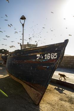 Essaouira, Morocco. Seagulls flying over a boat by Jolly Sienda