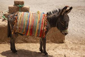 Skoura Palmeraie, Morocco. Donkey. by Jolly Sienda