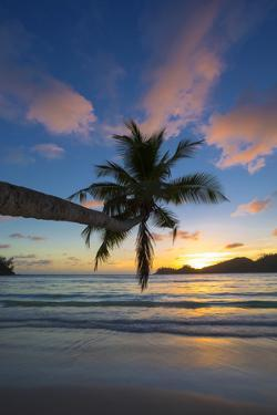 Palm Trees and Tropical Beach, Southern Mahe, Seychelles by Jon Arnold