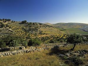 Shepherds Fields, Bethlehem, Israel by Jon Arnold