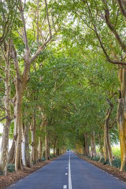 Tree Lined Road, Flacq, East Coast, Mauritius by Jon Arnold