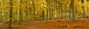 Woods in Autumn Time, Surrey, England, Uk by Jon Arnold