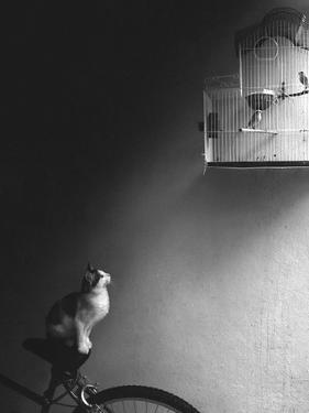 Patience by Jon Bertelli