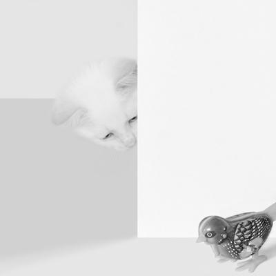 Peek a Boo by Jon Bertelli