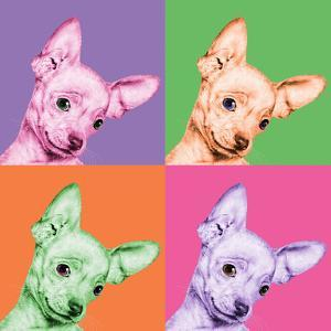 Sweet Chihuahua Pop by Jon Bertelli