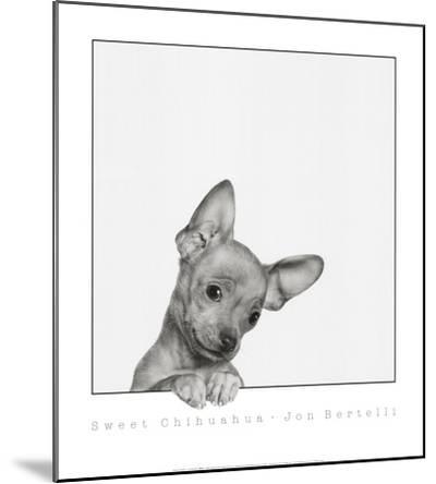 Sweet Chihuahua by Jon Bertelli
