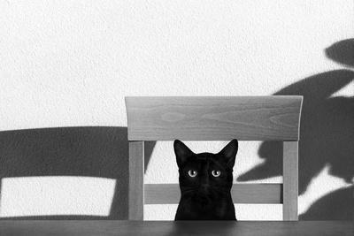 Where Is My Coffee?