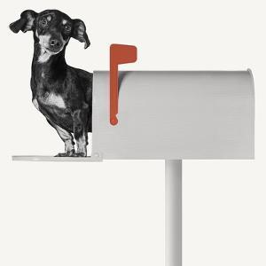 You've Got Mail by Jon Bertelli