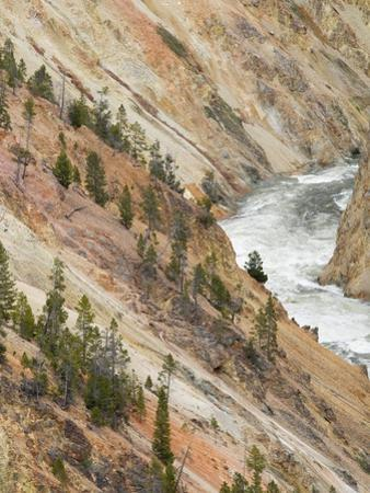 Yellowstone River in Grand Canyon of the Yellowstone by Jon Bower