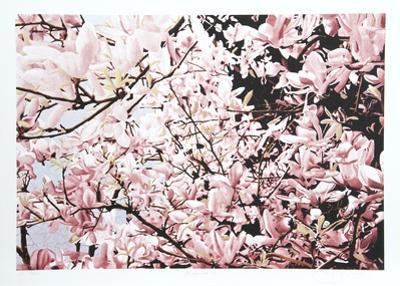 Magnolia II by Jon D'Orazio