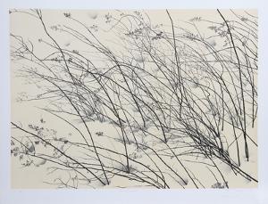 Windswept by Jon D'Orazio