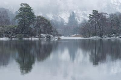 A winter scene at Rydal Water, Lake District National Park, Cumbria, England, United Kingdom, Europ