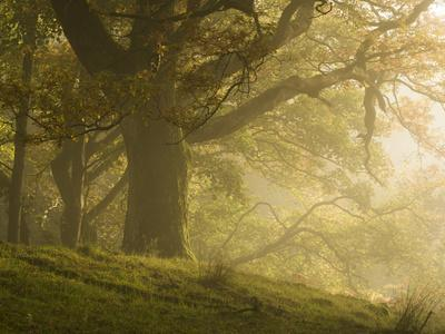 Early morning sunlight on the autumnal trees at Park Brow, Cumbria, England, United Kingdom, Europe