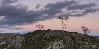 Skeletal trees atop crags at twilight at Holme Fell, Lake District National Park, Cumbria, England,
