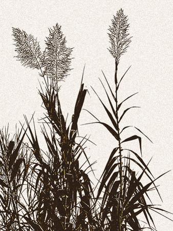 Grasslands Melody