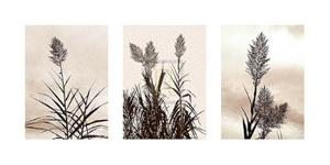 Grasslands by Jon Hart Gardey