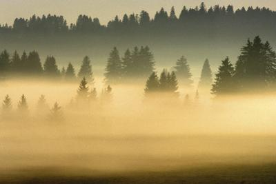 Misty Ridge I
