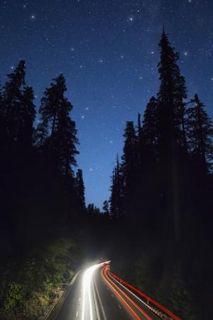 Highway 101 and the Avenue of the Giants at Night. by Jon Hicks