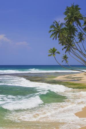 Sri Lanka Beach and Palm Trees by Jon Hicks