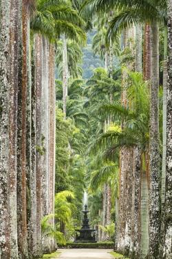 The Avenue of Royal Palms, Rio De Janeiro Botanical Garden. by Jon Hicks