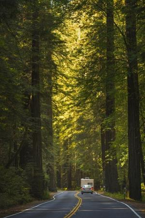 The Avenue of the Giants. by Jon Hicks