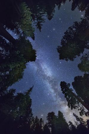 The Milkyway above Sequioa National Park by Jon Hicks