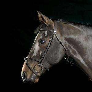 Brown Horse with Bridle, Close-Up by Jonatan Fernstrom