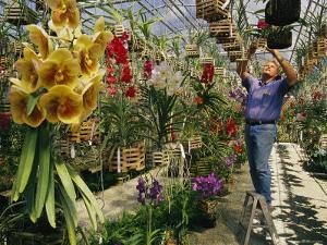 A Man Inspects Scores of Orchid Hybrids at His Florida Nursery by Jonathan Blair