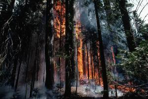 Fire in Forest Lit by Rangers by Jonathan Blair