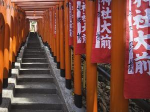 Line of torii gates at Hie Shrine by Jonathan Hicks
