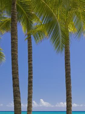 Palm Trees on Beach by Jonathan Hicks